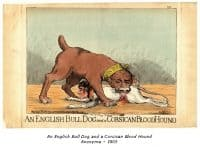 An English Bull Dog and a Corsican Blood Hound - Anonyme - 1803